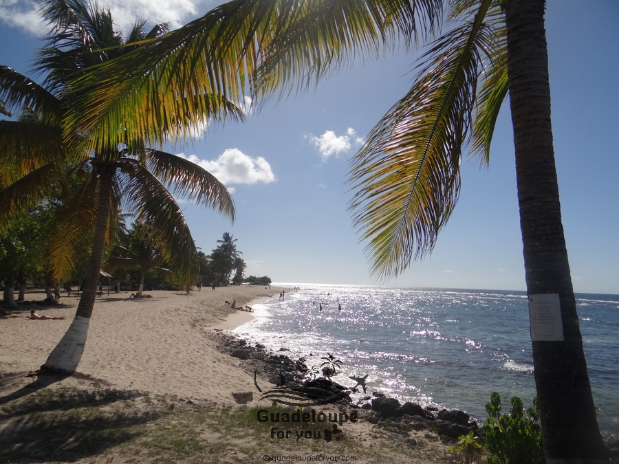 beautiful beach moule guadeloupe