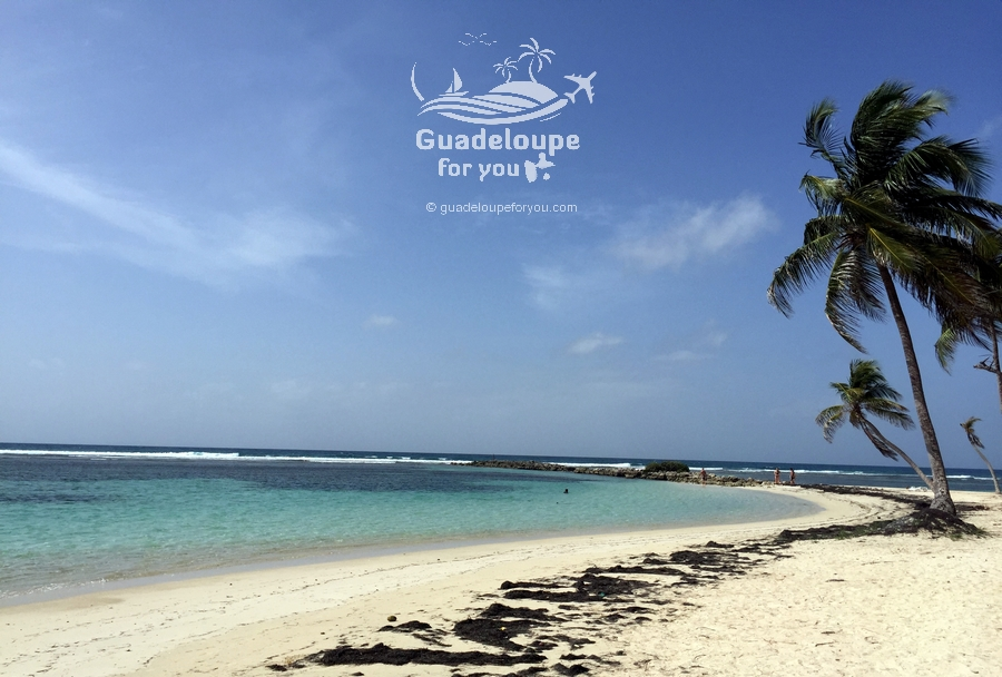 saint-anne beach guadeloupe