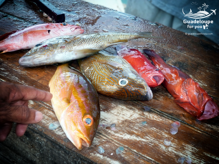 fisherman-fishes-fishmarket-saint-francois-2-guadeloupe